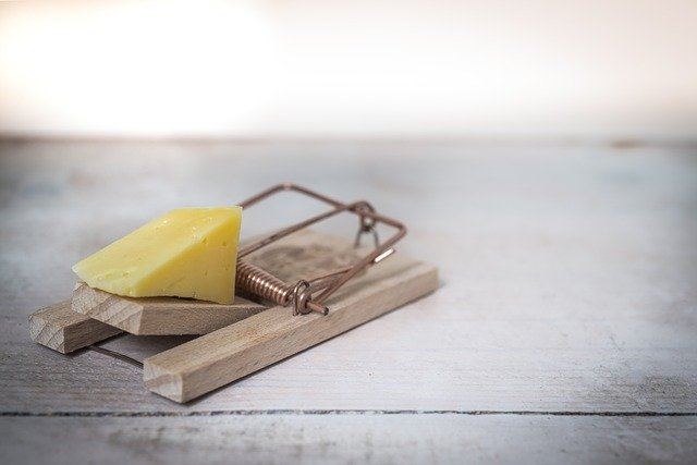 get rid of rats with mouse trap with cheese attached